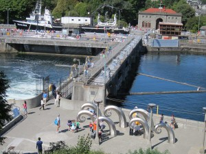 A view of Ballard Locks from my condominium in Seattle. The installation in the foreground is called Waves and is both much photographed and a source of great entertainment for children