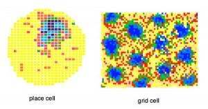 grid-cells